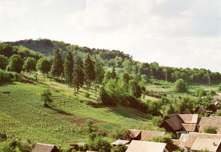 2001friedhof